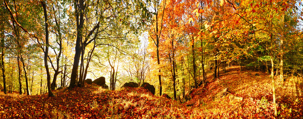 Fototapeten Wald Autumn forest in mountain at sunset with sun