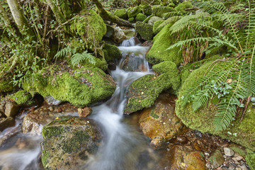 Water stream with mossy rocks in Muniellos Biosphere Reserve. Spain