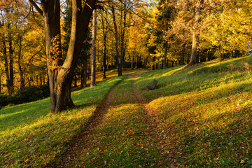 Autumn, Fall scene. Beautiful Autumnal park with pathway. Beauty nature scene.