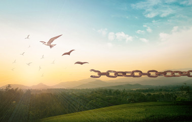 Freedom concept: Silhouette of bird flying and broken chains at autumn mountain sunset background