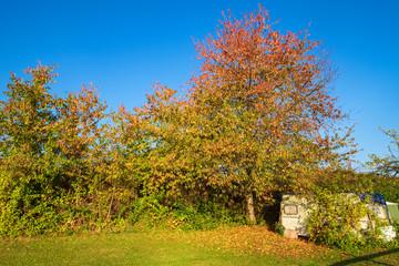 Herbstli8ch gefärbte Bäume