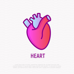 Human anatomical heart thin line icon. Modern vector illustration of human organ.
