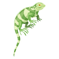 Khameleon reptile icon. Cartoon of khameleon reptile vector icon for web design isolated on white background
