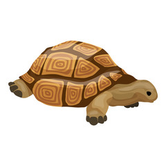 Turtle icon. Cartoon of turtle vector icon for web design isolated on white background