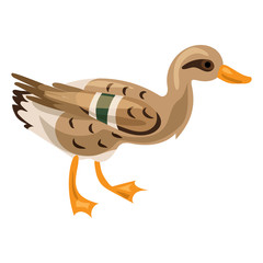 Wild duck icon. Cartoon of wild duck vector icon for web design isolated on white background