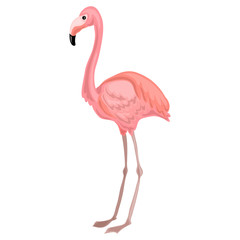 Flamingo icon. Cartoon of flamingo vector icon for web design isolated on white background