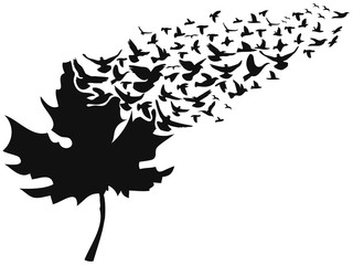birds flying away maple leaf