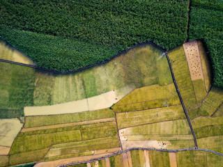 Rice and sugar cane fields in Southern China aerial
