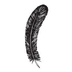 Black feather, hand drawn doodle, sketch outline, vector illustration