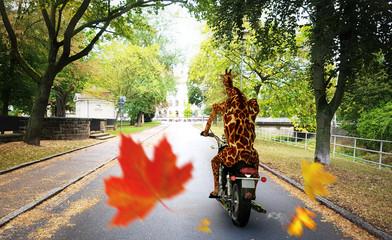 Obraz Giraffe fährt im Herbst mit Motorrad durch Stadt  - fototapety do salonu