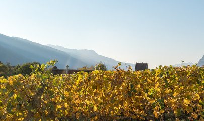 panorama landscape with alpine village and golden vineyard under cloudless sunset sky with mountain silhouettes