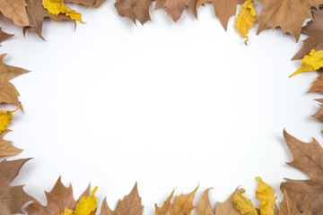 Creative Autumn layout. Dried leaves on white background. Border arrangement. Flat lay top view. Copy space.