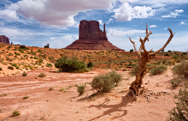 Obraz  Monument valley. Navajo tribal park, USA. - fototapety do salonu