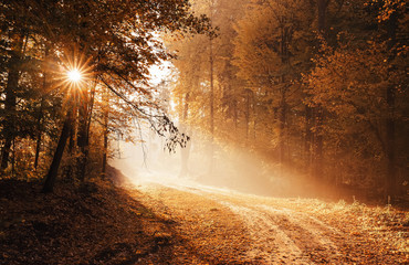 Sunrise at the empty forest road, on a foggy, autumn morning  with copy space