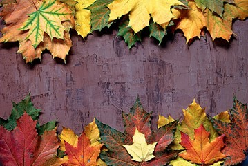 Multi-colored maple leaves on a dark brown background. Top view, copy space.