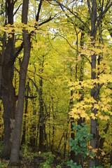 fall, autumn, apples, orchard, red, gold, golden, leaves, pumpkins, orange