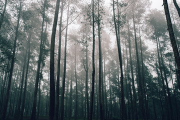 beauty of the forest in the fog