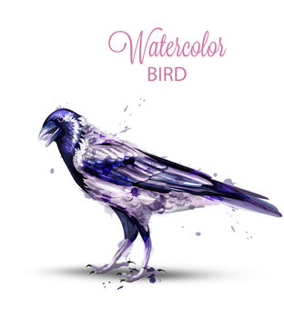 Crow with a nut watercolor Vector. Fall season isolated bird on white backgrounds