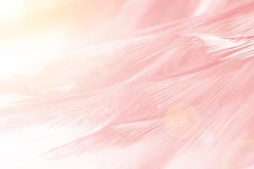 Beautiful Coral Pink vintage color trends feather pattern texture background with orange light  Fototapete