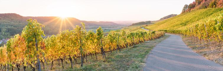 Panorama Weinberg im Herbst