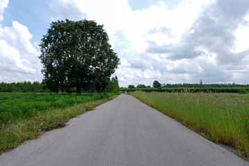 Rural roads, long ways to nature, trees, skies and mountains.