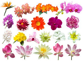 flowers isolated on white background include clipping path
