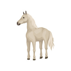 White horse with shiny eyes, flowing mane and long tail. Beautiful animal with hooves. Flat vector design