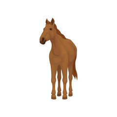 Brown horse standing isolated on white background. Lovely animal with hooves, flowing mane and long tail. Flat vector icon