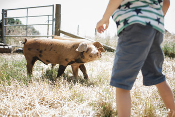 Midsection of boy standing by pigs on grassy field against sky at farm
