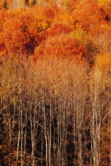 Photo sur Plexiglas Brique Awesome image of colorful indian summer forest background.