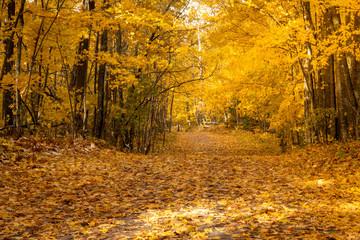 autumn lush yellow leaf trees