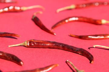 Chile de Arból (Arbol Chili Pepper) - Close Up