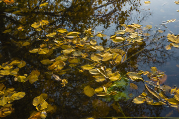autumn leaves on water, colorful, reflections, water