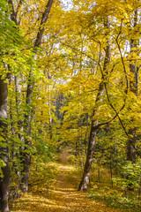 лесная тропинка засыпанная осенней листвой