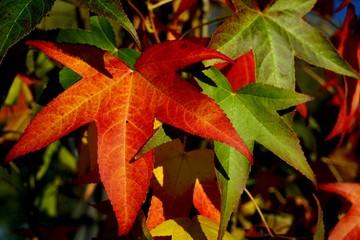 ............Bäume, Laubbäume, Blätter, bunt, Herbst..