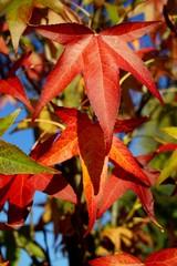 ..............Bäume, Laubbäume, Blätter, bunt, Herbst
