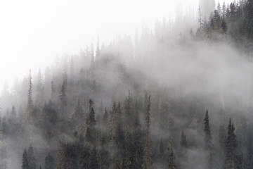 Cold scenery of fog and mist in forest in the Canadian Rockies with snow and fir trees in wonderful scenery and ice and blue rivers running through the scenery with snowy hut