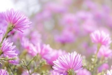 Purple floral background
