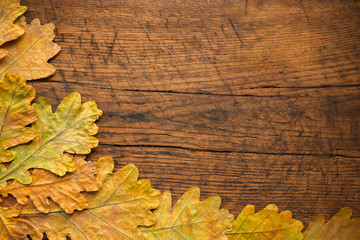 Autumn leaves are placed on a wood background with copy space. Oak leaves on a wooden old board.