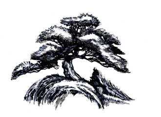 Bonsai tree, Ink drawing.