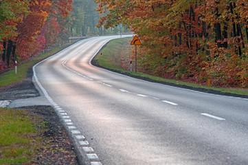 Asfaltowa droga w jesiennym lesie.