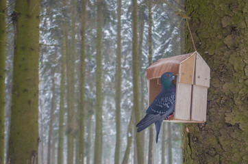pigeons sit on the feeder in the winter forest