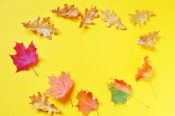 Printed kitchen splashbacks Beige Flat lay yellow autumn background. Round frame. Red and orange maple and oak leaves. Mockup