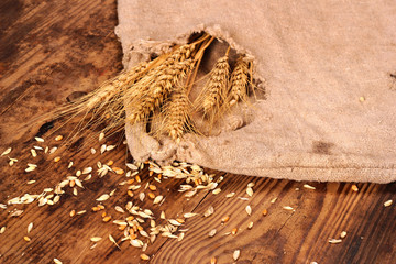 Ears of wheat, grain and shabby sack on a wooden background