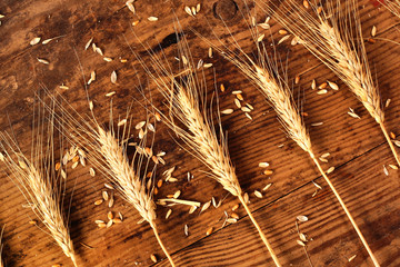 Ears of wheat and grain on a wooden background