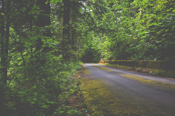 Mossy Mountain Road