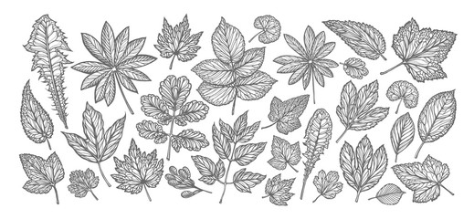 Decorative leaves and grass. Nature concept. Vintage sketch vector illustration