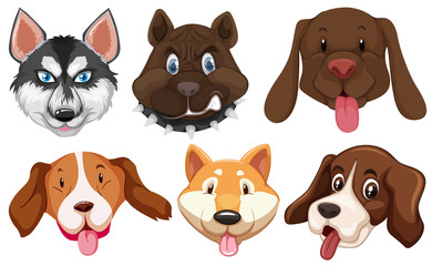 Set of dog breeds head