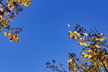 Look up for fall foliage