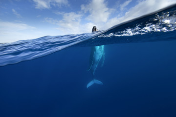 Spy Hopping Humpback